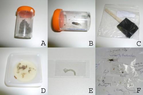 Envases conteniendo muestras de los pacientes