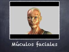 Músculos de la cara y sus funciones en la expresión.