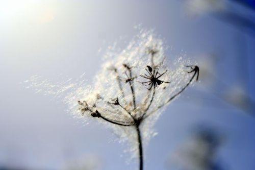 Primavera, tiempo de alergias